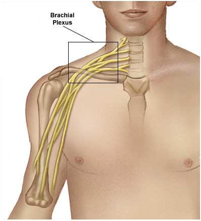 zdroj: medicalook.com